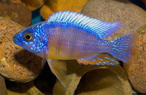 Рыбы домашние фото